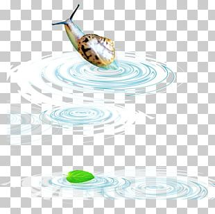 Water Snail PNG