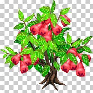 Java Apple Fruit Tree Strawberry PNG