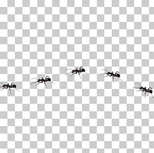 Ant Insect PNG