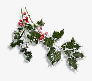 Snow Christmas Tree Branches And Red Berries PNG