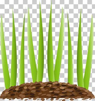 The Lawn Guy LLC Sod Fuquay-Varina Holly Springs PNG