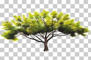 Pine Family Sky Plc PNG