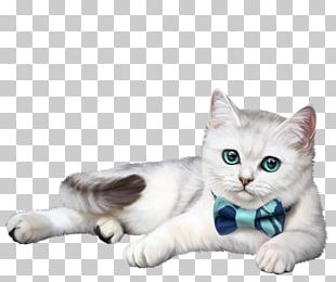 Kitten American Shorthair Whiskers Domestic Short-haired Cat British Shorthair PNG