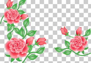 Garden Roses Floral Design Cut Flowers Carnation PNG