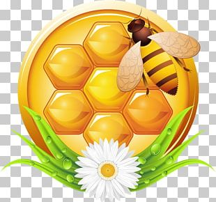 Bee Honey Photography Illustration PNG