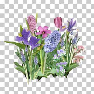 Flower Violet Lavender Lilac Purple PNG