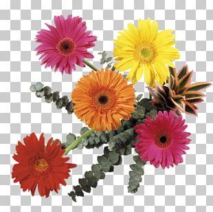 Flower Bouquet Transvaal Daisy Cut Flowers PNG