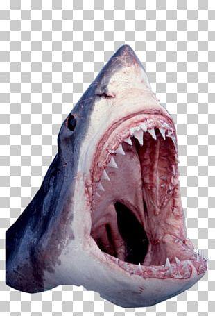 Great White Shark Tiger Shark Cartilaginous Fishes Shark Jaws PNG