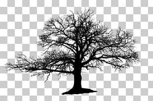 Tree Silhouette Drawing Oak PNG