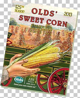 Corn On The Cob Vegetarian Cuisine Sweet Corn Corn Kernel PNG