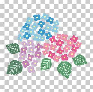 French Hydrangea Petal East Asian Rainy Season PNG