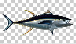 Thunnus Fish PNG