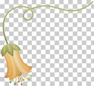 Petal Flower Floral Design Christmas PNG