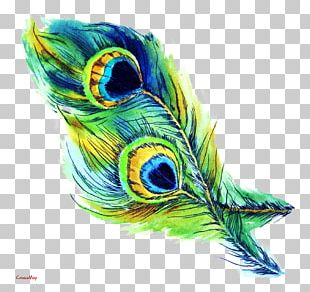 T-shirt Feather Peafowl Drawing PNG