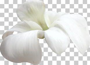 Petal White Flower PNG