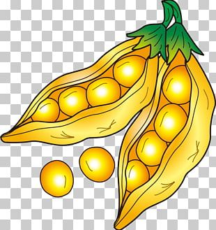 Soybean Drawing PNG