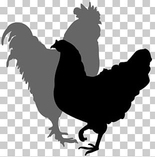 Chicken Rooster Silhouette Hen PNG