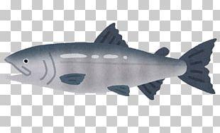 Chum Salmon Smoked Salmon Salmonids Fish Sockeye Salmon PNG