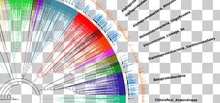 Chart Diagram Data Set Label PNG
