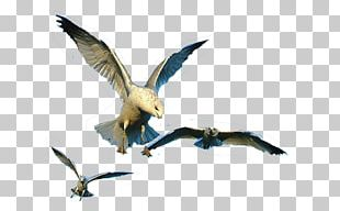 Water Bird Goose Beak Cygnini PNG