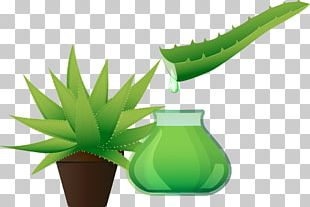 Hand-painted Aloe Extract PNG