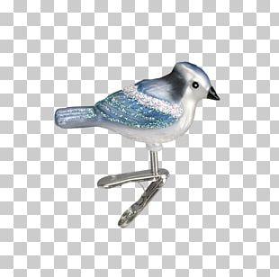 Christmas Day Christmas Ornament Christmas Lights Bird Parrot PNG