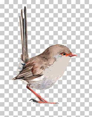 Wren Bird Watercolor Painting Drawing PNG