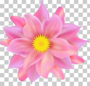Flower Petal Pink PNG