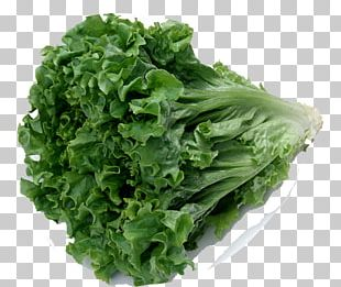 Celtuce Chinese Cuisine Organic Food Leaf Vegetable Romaine Lettuce PNG