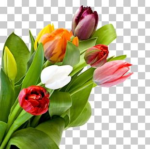Tulip Flower Bouquet Desktop Rose PNG