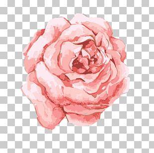 Watercolor: Flowers Watercolor Painting Pink Flowers PNG