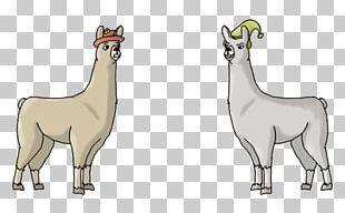 Llamas With Hats Vicuña Alpaca PNG