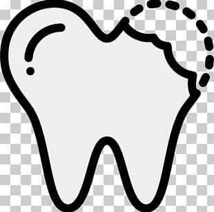 Human Tooth Dentistry Medicine PNG