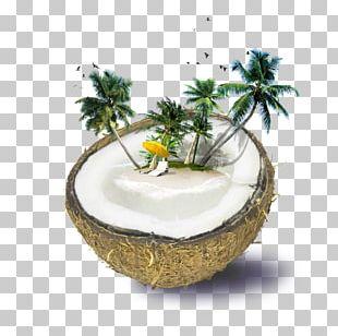Fiji Weligama Coconut Water Beach PNG