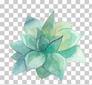 Succulent Plant Watercolor Painting Art Wall Decal PNG