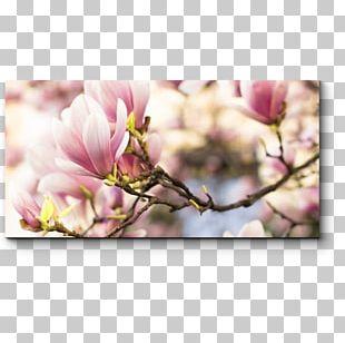 Tree Chinese Magnolia Magnolia Acuminata Flower Blossom PNG