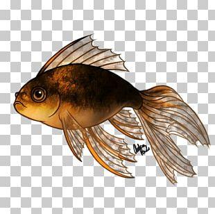 Fantail Oranda Lionhead Koi Fish PNG