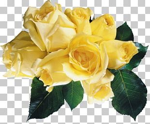 Garden Roses Yellow Flower Red PNG