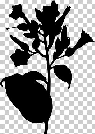 Tobacco Plants Wiki Tobacco Pipe PNG, Clipart, Cigar