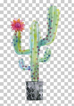 Cactaceae Succulent Plant Watercolor Painting Paper PNG