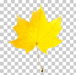 Open Yellow Autumn Leaf Color PNG