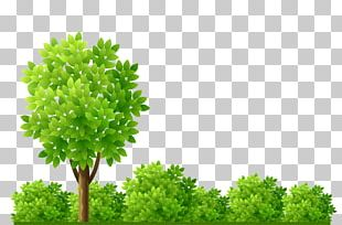 Garden Shrub Tree Illustration PNG