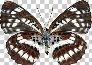 Brush-footed Butterflies Moth Gossamer-winged Butterflies Butterfly Transparency And Translucency PNG