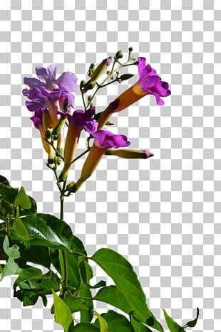 Cut Flowers Plant Stem Herbaceous Plant Annual Plant PNG