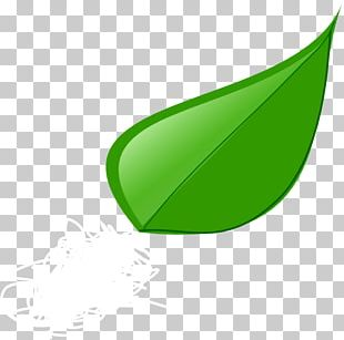 Leaf Others Grass PNG