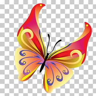 Butterfly Insect PNG