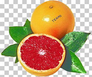 Blood Orange Grapefruit Juice Rangpur Tangelo PNG