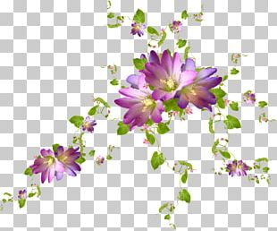 Cut Flowers Purple Violet Floral Design PNG
