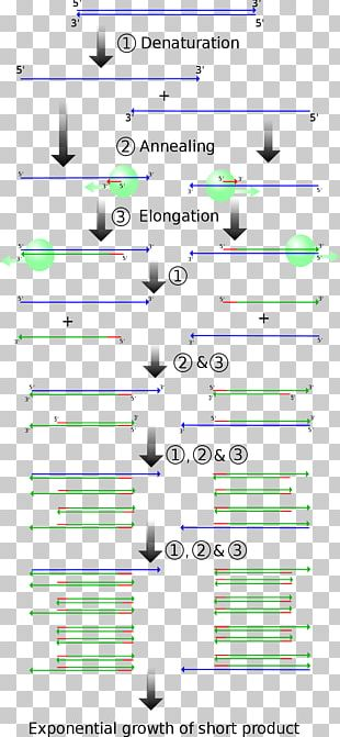 Real-time Polymerase Chain Reaction Molecular Genetics PNG