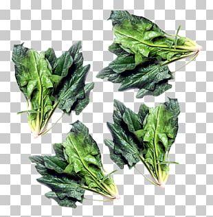 Spinach Vegetarian Cuisine Chard Komatsuna Vegetable PNG